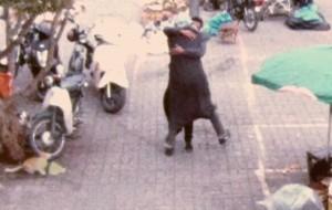 As cameras de segurança também mostram a bondade das pessoas!