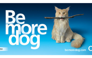Be more dog!